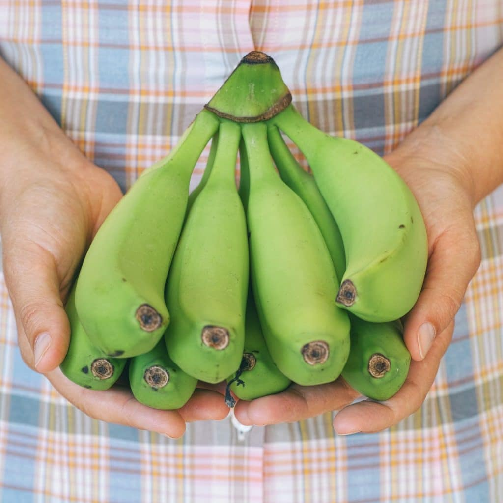 femme tiens des bananes vertes pas mûres dans ses mains