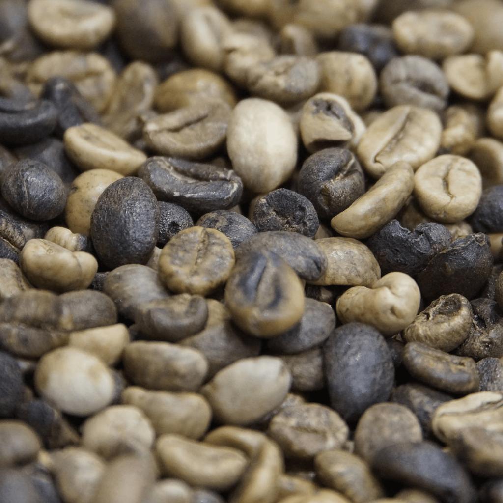café vert à torréfier grade 3