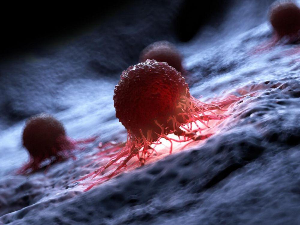 Le chardon marie traite le cancer