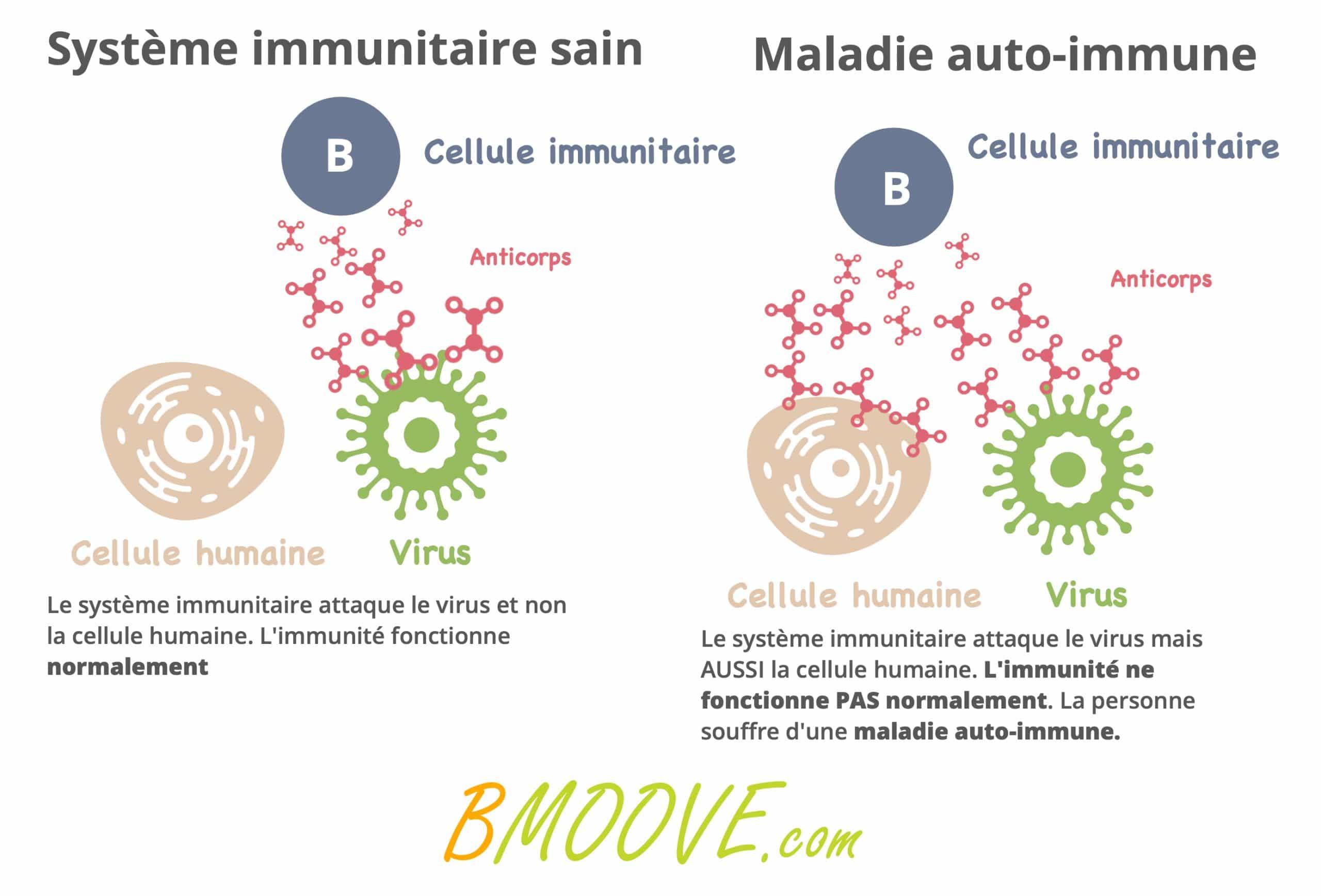 différence système immunitaire sain et maladie auto immune