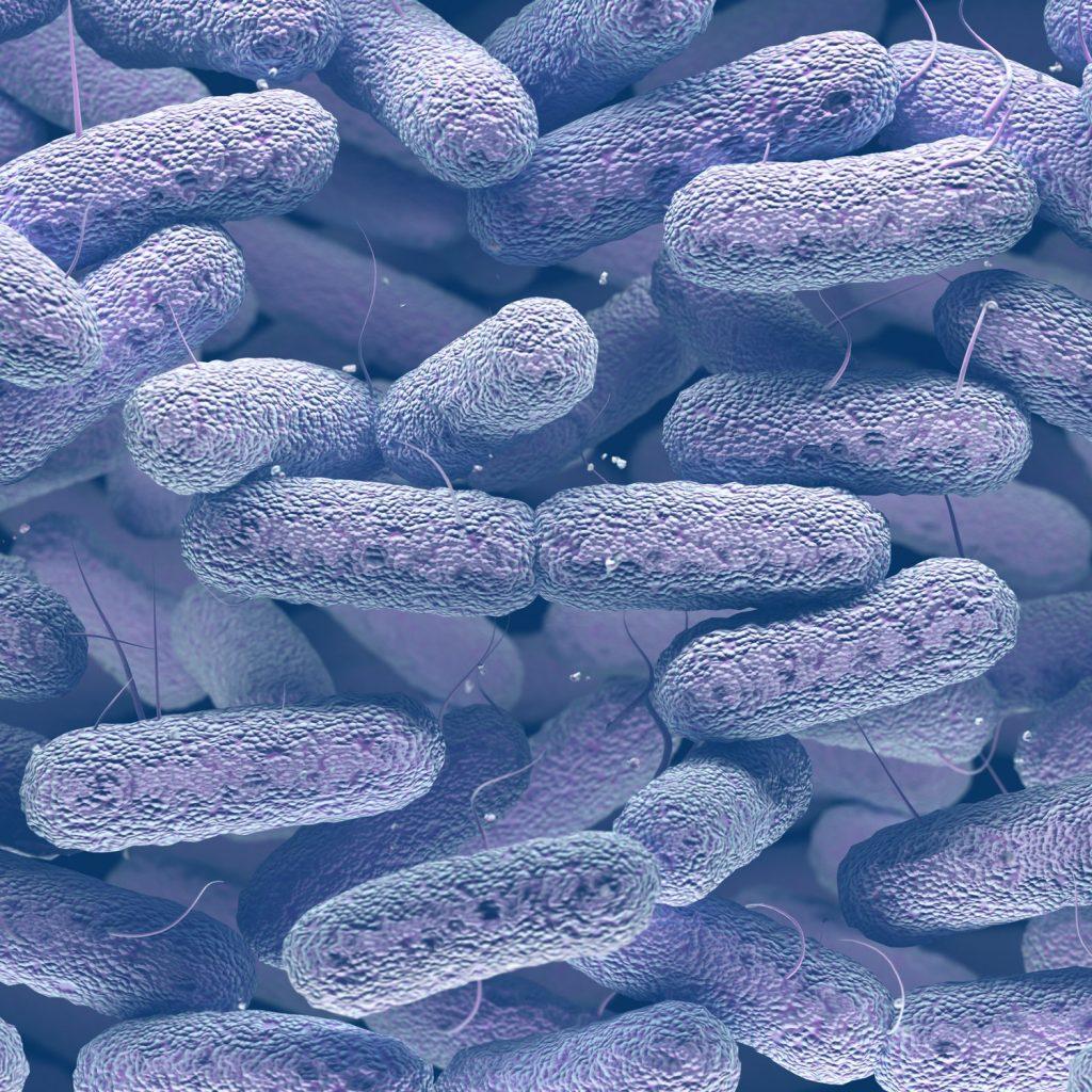 microbiote dysbiose