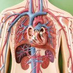 blé et maladies cardiovasculaires