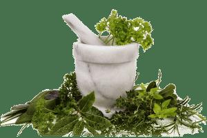 alimentation bio paléo