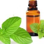 menthe -poivree huiles-essentielles- huile- essentielle-de- menthe- poivre-inhalation- huile- essentielle menthe- poivree- huile-essentielle- menthe poivree- utilisation