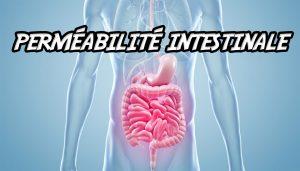 perméabilité intestinale