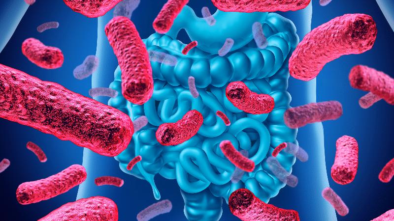 restaurer son microbiote