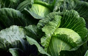 psoriasis et légumes vers